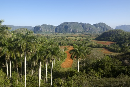 america countryside: Nature and landscape, view of hills and mountains in Vinales, Cuba. Wide angle shot