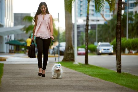 Jonge zakelijke vrouw met koffer lopen naar het kantoor met haar kleine hond 's ochtends vroeg. Het huisdier is een puppy maltes gemengd met Franse poedel. Concept van dierenliefhebbers en moderne zakelijke lifestyle.