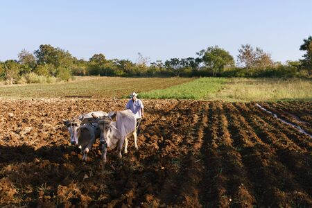 middle america: Farming and cultivations in Latin America. High angle view of middle aged hispanic farmer manually ploughing the soil with ox at the beginning of the growing season. Stock Photo