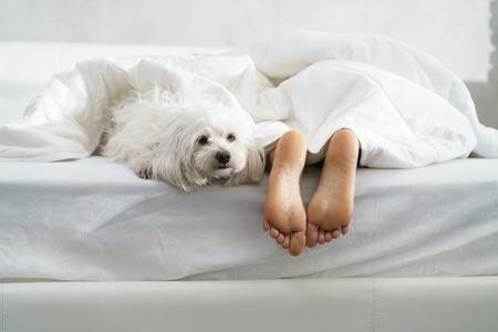 Chica negra durmiendo en la cama con perro y mostrando los pies