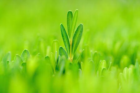 Grünes Blatt, das sich von der Masse abhebt
