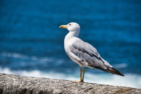 Seagull Resting On Wall Watching The Sea Фото со стока