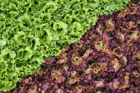 High Angle View Of Red And Green Types Of Salad In Market Stall