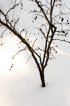 tree with minimal snow