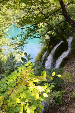 vegetation: vegetation on plitvice park