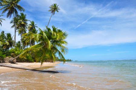 Palm Tree, Blue Lonley Beach Brazil, Salvador Bahia. Beautiful Adventure. Stock Photo