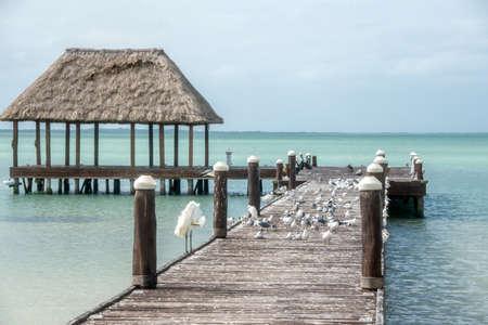 roo: Beautiful sea colors, caribbean. Traveling through Mexico, Quintana Roo.