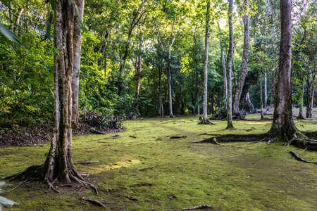 selva: Viaje a trav�s de Guatemala, camino en el envoirment Parque Tikal, Selva. Foto de archivo