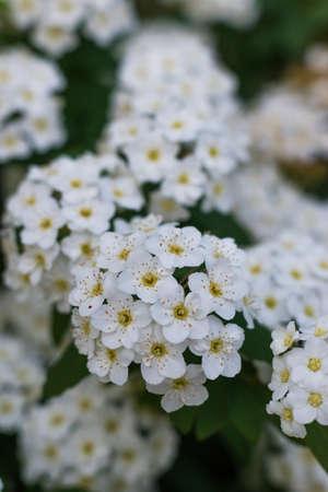 Beautiful little flowers blooming Standard-Bild
