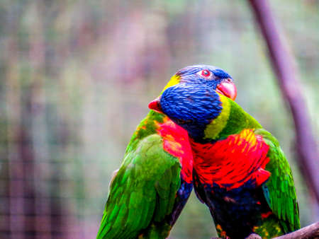 Lories (small to medium-sized arboreal parrots)