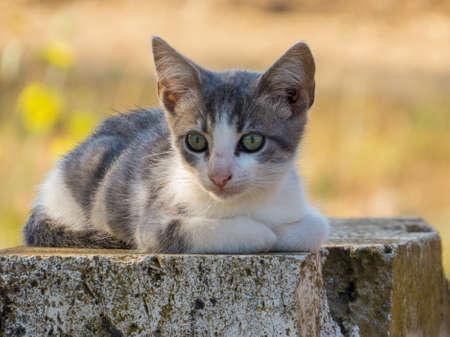 Cute wild kitten in Canino, Italy
