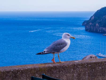 Sea gull in Ischia, Italy 스톡 콘텐츠 - 150645773