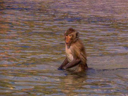 Monkey on Ko Klet Kaeo (or Monkey Island), Pattaya, Thailand