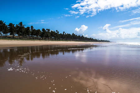 Paradisiacal tropical beach in northern Brazil in the morning 版權商用圖片