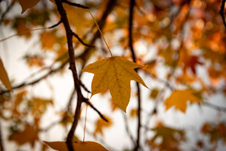 Leaves and vegetation in autumn Stock Photo
