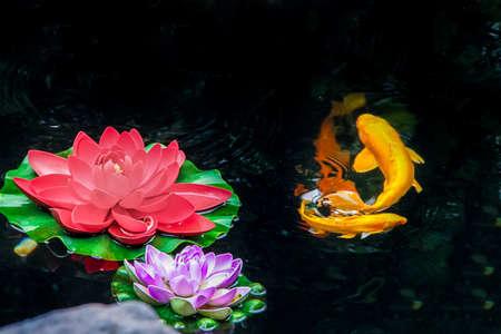 koi: Koi fish and flowers on a pond - Shanghai, China