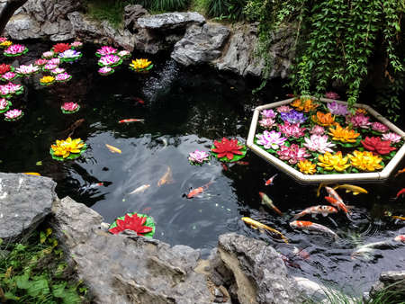 Koi fish and flowers in a pond - Shanghai, China