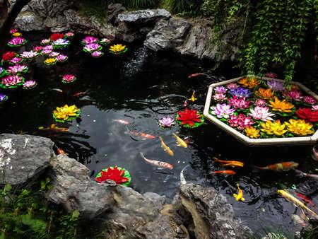 koi: Koi fish and flowers in a pond - Shanghai, China