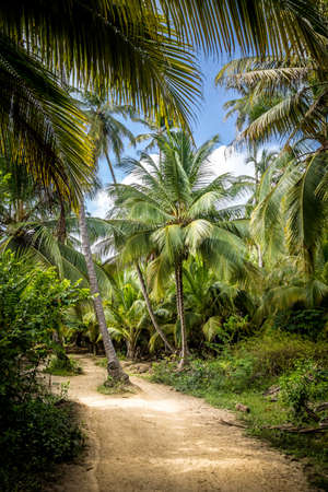 marta: Path on the Palm Tree Forest - Natural Tayrona National Park, Colombia