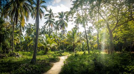 팜 트리 포리스트 - 자연 Tayrona 국립 공원, 콜롬비아에 경로