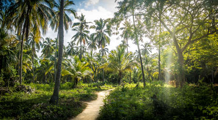 Path on the Palm Tree Forest - Natural Tayrona National Park, Colombia