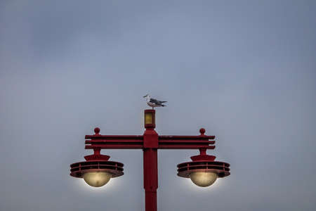 Seagull standing on a japanese eletric lamp - Tokyo, Japan Imagens