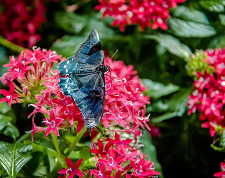 conservatory: Butterfly on a pink flower