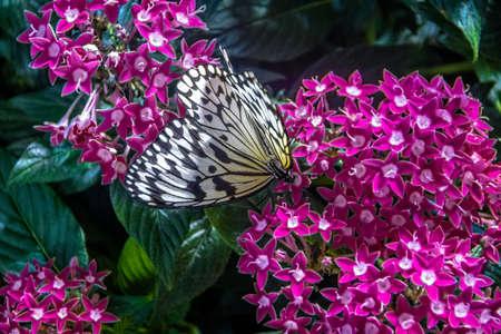 White Butterfly Reklamní fotografie
