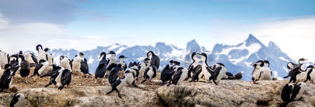 ocea: Cormorants - sea birds in the Beagle Channel, Ushuaia, Argentina