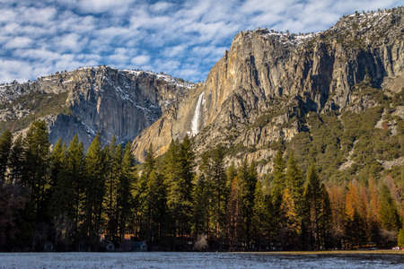 sequoia: Yosemite Park - California, USA