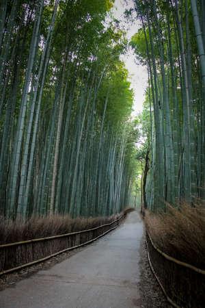 Arashiyama Bamboo Forest - Kyoto, Japan 免版税图像