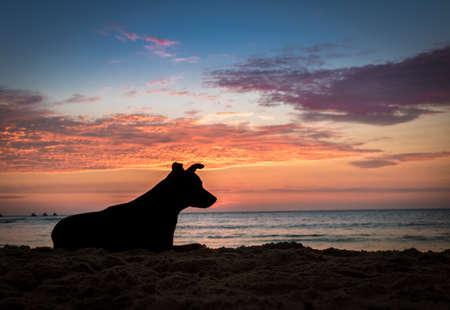 Silhoutte of a dog at sunset on a beach - Mancora, Peru