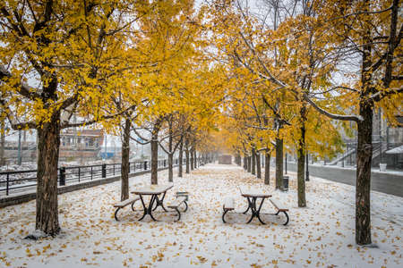 Walkway on the first snow with yellow leaves falling of trees - Montreal, Quebec, Canada