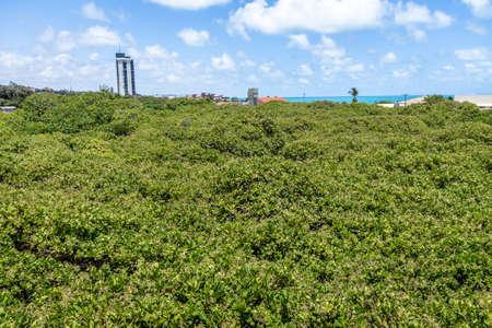 Worlds Largest Cashew Tree - Pirangi, Rio Grande do Norte, Brazil
