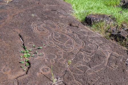 Papa Mangai Petroglyph carvings at Papa Vaka site - Easter Island, Chile
