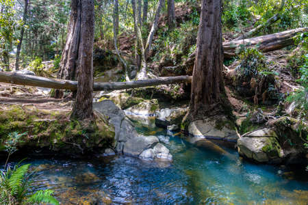 antioquia: River and woods at Arvi Park - Medellin, Antioquia, Colombia