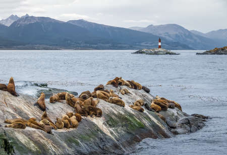Sea Lions island and lighthouse - Beagle Channel, Ushuaia, Argentina Stock Photo