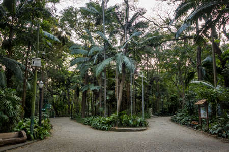 Trianon Park at Paulista Avenue - Sao Paulo, Brazil Stock Photo