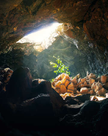 Plant hit by sunlight at Ana Te Pahu Cave - Easter Island, Chile