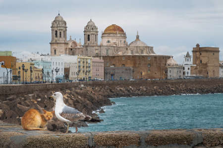 A Cat and a Seagull with Cadiz Cathedral on the background - Cadiz, Andalusia, Spain
