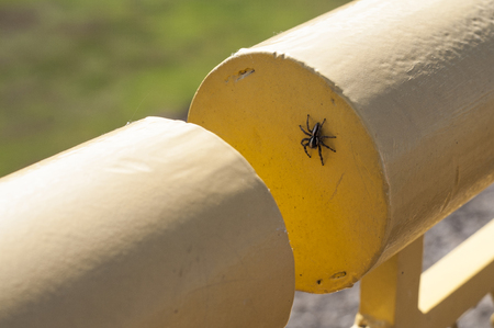 eight legs: Small spider on a yellow metal railing
