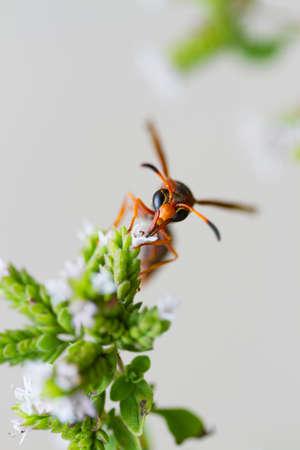 wasp Imagens
