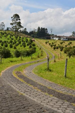 hass: Avocado road Quindio