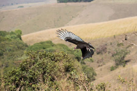 the flight of the vulture