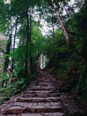 Stair path leading up to the top of the mountain surrounded by green forests on a spring day