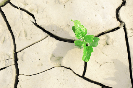 Little weak plant growing on the cracked ground Reklamní fotografie