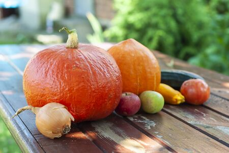 Natural pumpkins and other autumn vegetables on the wooden table. Sunny summer day.