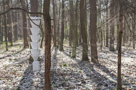 Pest trap hanging on the tree in the forest. Stock Photo