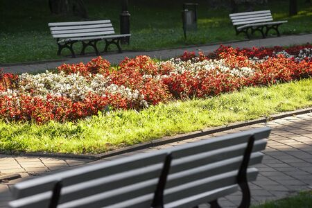 Red and white flowers blooming in the park. Naleczow, Poland