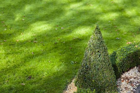 Closeup of geometric shape hedge